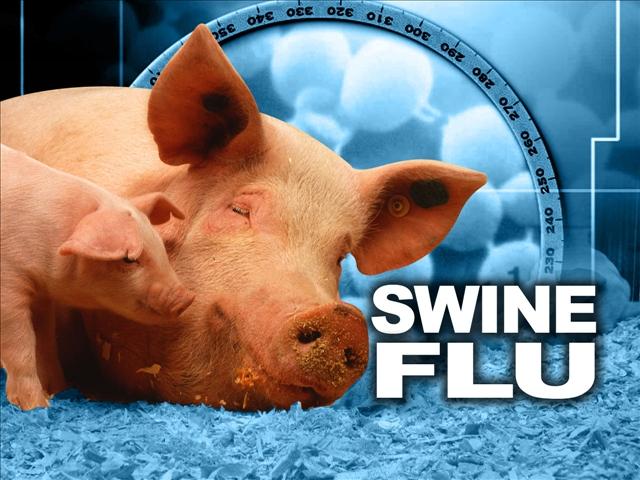 Asian flu swine flu
