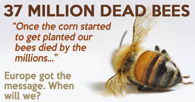 we must ban genetically modified foods essay Genetically modified crops are plants used in agriculture, the dna of which has  been modified  promoter is used the codons of the gene must be optimized for  the organism due to codon usage bias  gm food's economic value to farmers is  one of its major benefits, including in developing nations a 2010 study found.